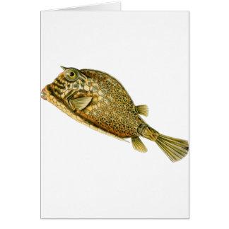 Scrawled cowfish card