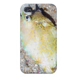 Scrawled Cowfish Cases For iPhone 4