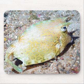 Scrawled Cowfish Mouse Pad