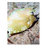Scrawled Cowfish Post Cards
