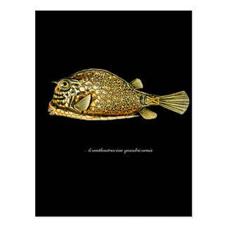 Scrawled cowfish postcard
