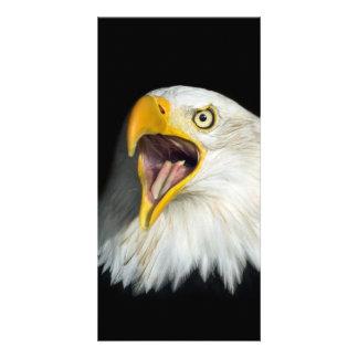 Screaming American Bald Eagle Card