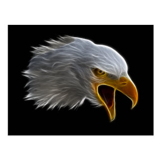 Screaming American Bald Eagle Head Postcard