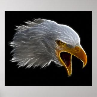 Screaming American Bald Eagle Head Poster