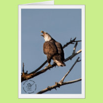 Screaming Bald Eagle Card