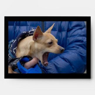 Screaming Chihuahua Envelope