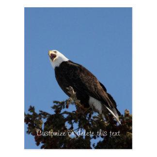 Screaming Eagle; Customizable Postcard