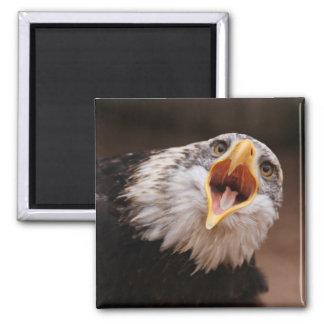 Screaming Eagle Magnet Fridge Magnets