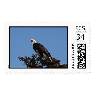 Screaming Eagle Postage