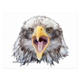 screaming eagle postcard