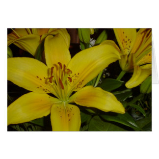 Screaming Lily Greeting Cards