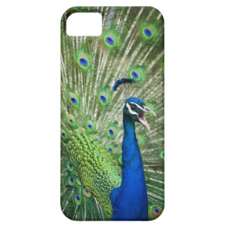 Screaming peacock iPhone 5 cover