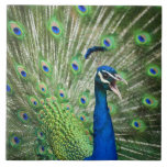 Screaming peacock ceramic tile