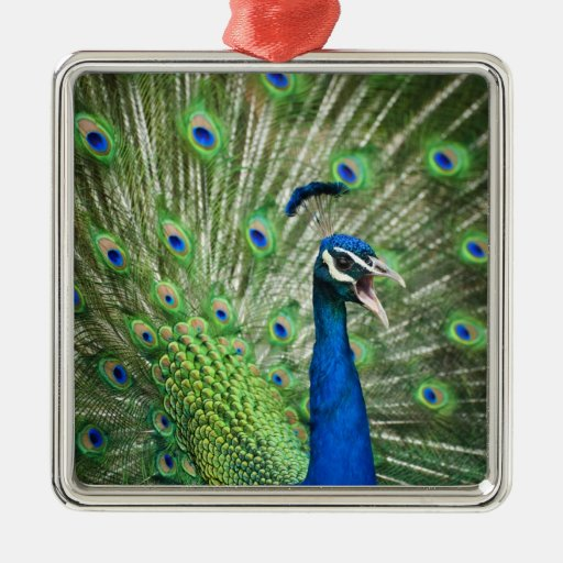 Screaming peacock christmas ornament