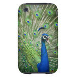 Screaming peacock iPhone 3 tough covers