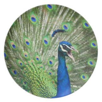 Screaming peacock party plates