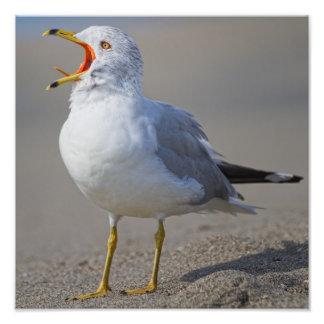 Screaming Seagull Photographic Print
