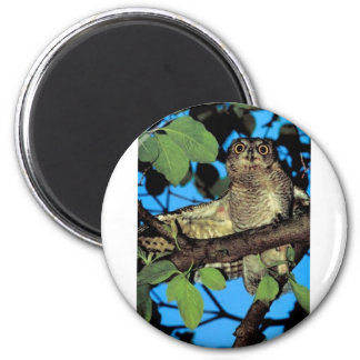 Screech owl 2 inch round magnet