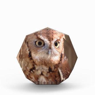 screech owl acrylic award
