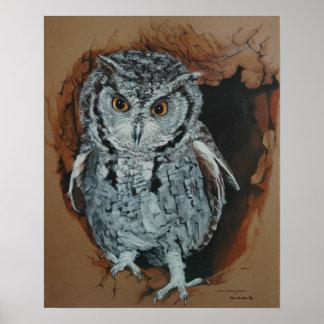 Screech Owl Art Poster