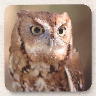 screech owl beverage coaster