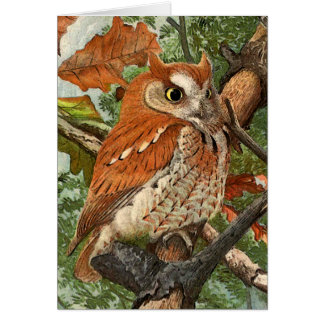 Screech Owl (brown phase) Greeting Card