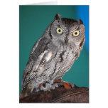 Screech Owl Cards