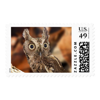 Screech Owl – Did I Make That Noise?? Postage