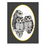 Screech Owl Family Postcard