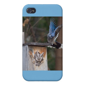 Screech-Owl Harassed by Blue Jay Cover For iPhone 4