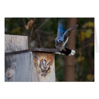 Screech-Owl Harassed by Blue Jay Greeting Card