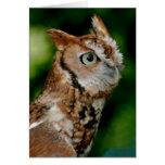 Screech Owl Notecard Cards