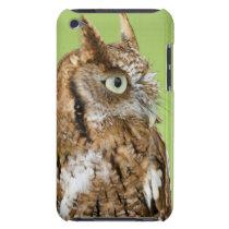 Screech owl portrait iPod touch case