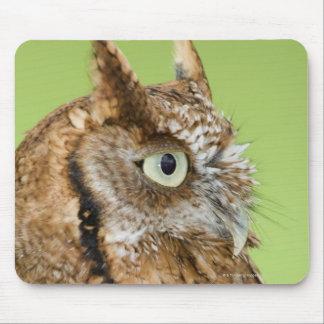 Screech owl portrait mouse pad