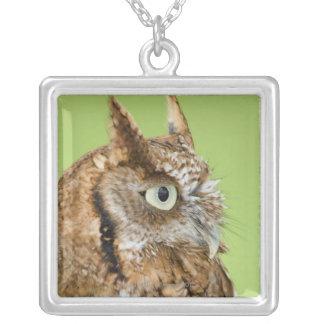 Screech owl portrait square pendant necklace