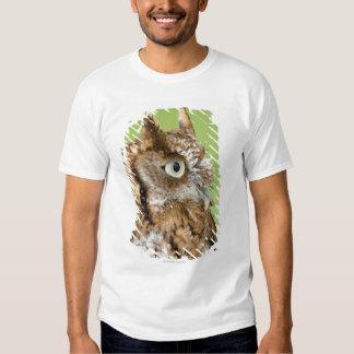 Screech owl portrait t shirt