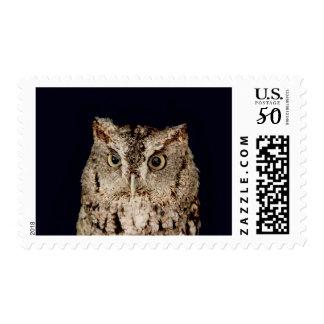 Screech Owl Postage