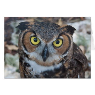 Screech Owl Stationery Note Card