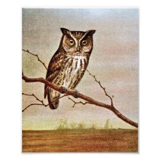 Screech Owl Vintage Illustration Photographic Print