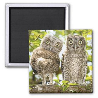 Screech Owls Chicks 2 2 Inch Square Magnet