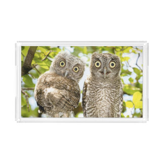 Screech Owls Chicks 2 Rectangle Serving Trays