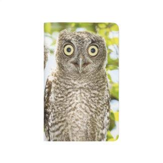Screech Owls Chicks 2 Journal