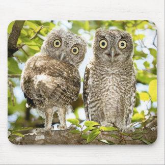 Screech Owls Chicks 2 Mouse Pad