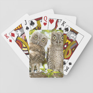 Screech Owls Chicks 2 Playing Cards