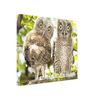 Screech Owls Chicks Canvas Print