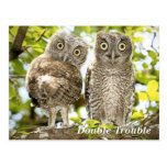 Screech Owls Chicks Postcards