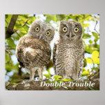 Screech Owls Chicks Poster