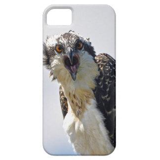 Screeching Osprey Fish-Eagle Wildlife Photograph iPhone SE/5/5s Case