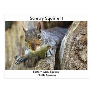 Screwy Squirrel! Postcard