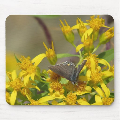 Scrub Hairstreak Butterfly Mouse Pad